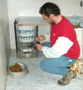 administrar flores de bach a perros