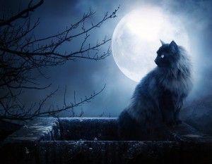 3 Gato_luna_llena