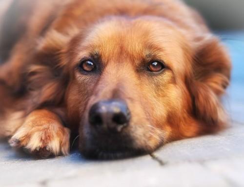Los perros sienten. Con terapias Naturales y siendo más humanos convivimos mejor: 2016 – últimos 4 artículos:
