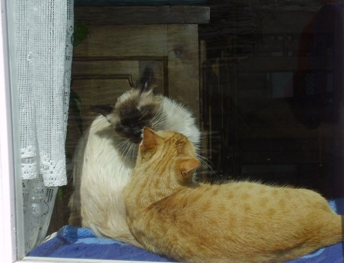 El curso de Flores de Bach para Animales mejorará la relación con tu gato: