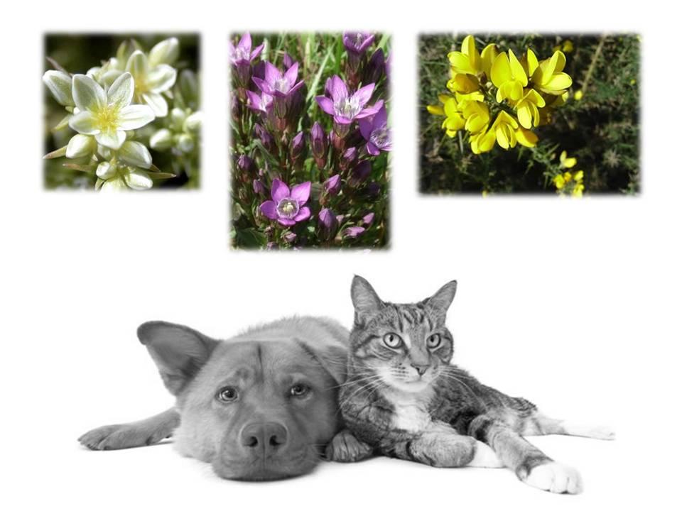 flores bach articulo