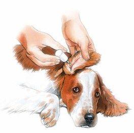 oido perro administracion