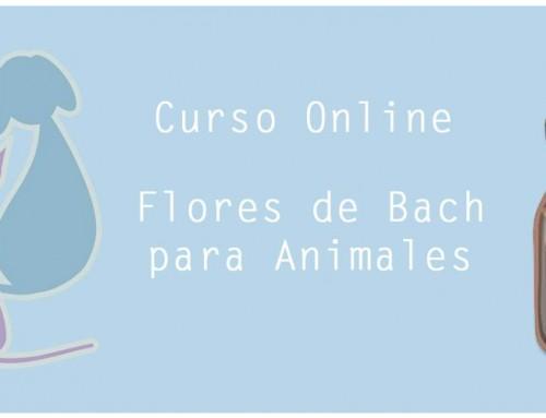 Preguntas frecuentes sobre el Curso Online de Flores de Bach para Animales