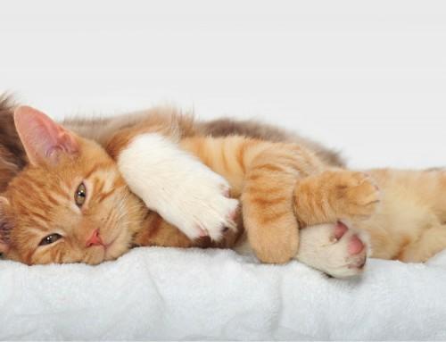 ¿Convives con perros y/o gatos? La solución eres tú.