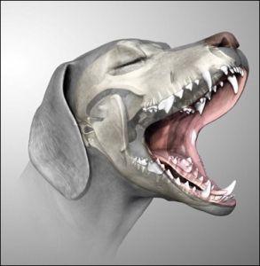 dog-teeth_thumb