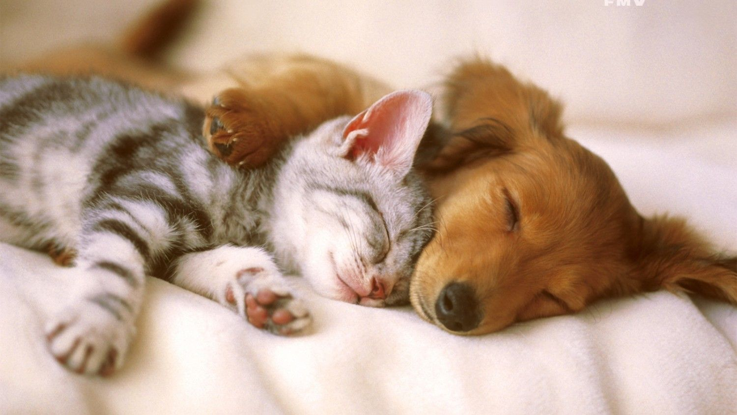 Cat-And-Dog-Wallpaper_6