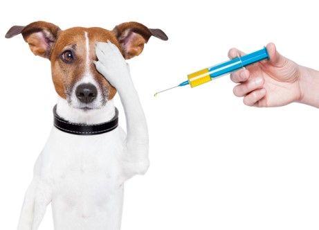 1 vacunas