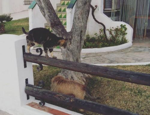 Mudanzas: Flores de Bach para tu perro y tu gato, con el ejemplo de Klim y Daka
