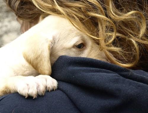 Viajes y vacaciones: ¿y si tu perro no puede venir de viaje contigo?