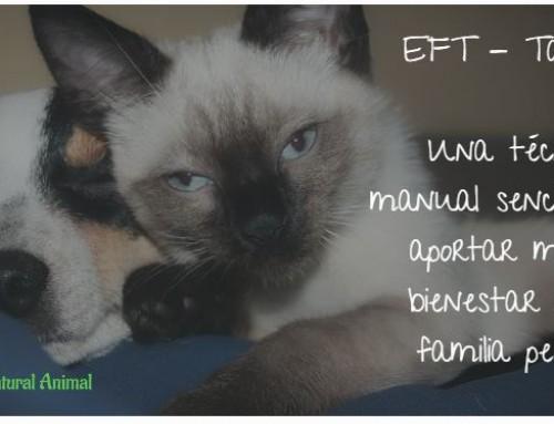 EFT para perros y gatos. El tapping, una vez aprendido, da satisfacciones enormes.